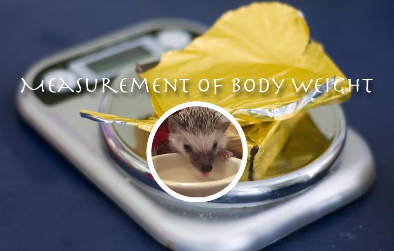 大福、初の体重測定