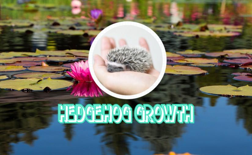 ハリネズミの成長